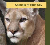 Animals of Blue Sky Canyon