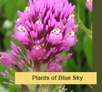 Plants of Blue Sky Canyon